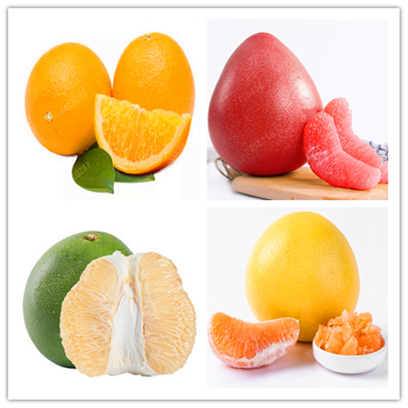 Red Meat Pomelo Bonsais Wholesale Guanximiyou Fruit Grapefruit Bonsais Bonsais South Fruiting More Manageable 5 Pcs