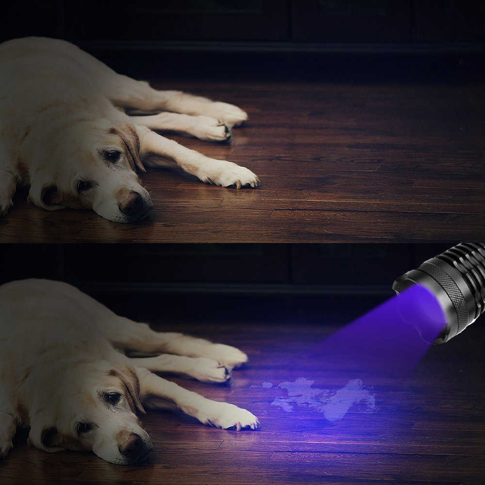 La plus brillante lampe de poche UV 2in1 LED Linternas torche 395nm détecteur d'urine ultraviolette pour tapis de camping