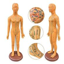 58CM Female Lettering acupuncture point body mannequin acupuncture, Medical Research massage reflex zone teaching model 1pc C518