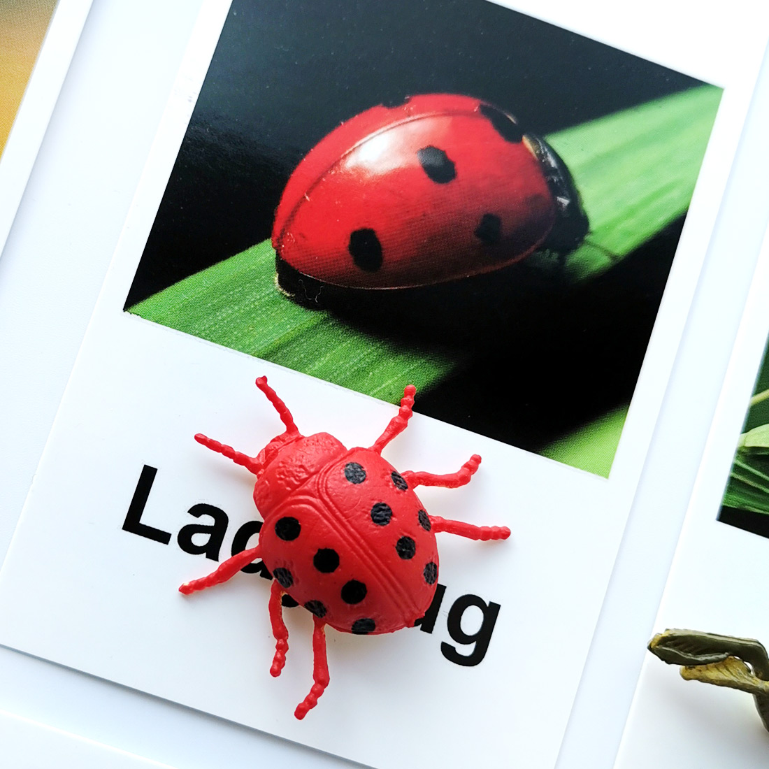Montessori Sensory  Toy Insect Animal Card Early Learning Language Montessori Animal And Card Puzzle Toys For Children L1046F