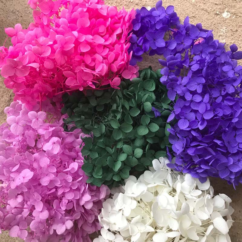2g Real Natural Fresh Preserved Hydrangea Heads Dried Forever Rose