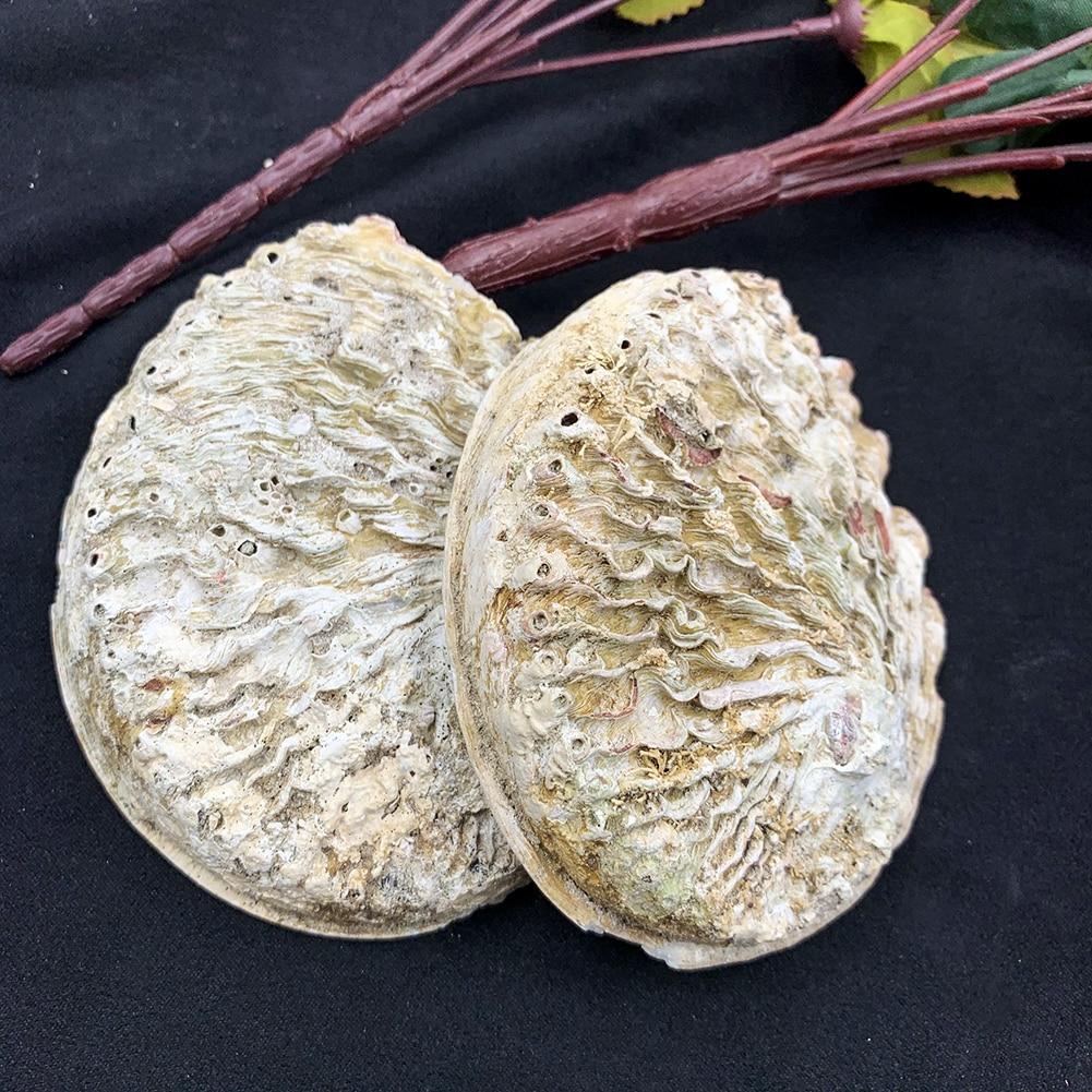 11-12cm Seashells Natural Abalone Shells Ocean Home Decor DIY Nautical Wedding Decoration Soap Holder Shells for Jewelry Making 5
