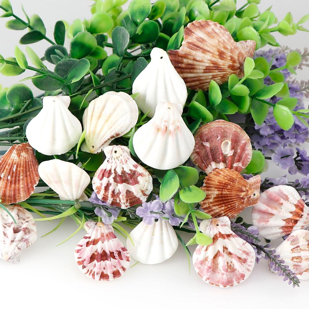 10pc/lot 20-55mm Mixed Scallop Shell Pendants  Beach Craft  Natural Sea Shell Craft Decoration DIY Handmade Accessories
