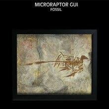 Vitae Microraptor Gui Fossil Photo Frame Dinosaur Toys Animal Collector Decoration Adults Gift
