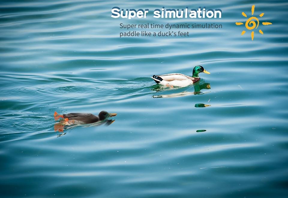 duck_05