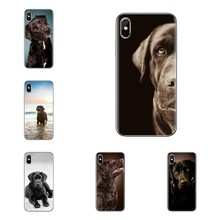 Black Lab Labrador puppy Dog Soft Transparent Cases Covers For iPod Touch Apple iPhone 4 4S 5 5S SE 5C 6 6S 7 8 X XR XS Plus MAX(China)