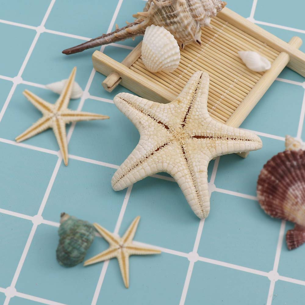 1pc/box 5-7cm Big  Hoe Starfish Beach Craft  Natural Sea Stars Craft Decoration DIY Handmade Accessories
