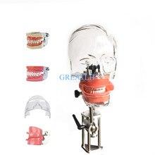 หัวทันตกรรมจำลอง Nissin manikin Phantom หัวชุดใหม่สไตล์ Bench Mount สำหรับทันตแพทย์การสอน