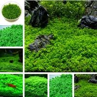 Hot selling 1 kg New Water Aquarium Grass Bonsai Water Aquatic Plant Bonsai Family Easy Plant Bonsai For Decorate Aquatic