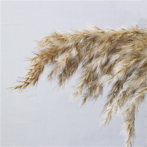 Image 4 - 20 pcs Natural Dried Pampas Grass Phragmites Communis,Wedding Flower Bunch 50 55 cm Tall for Home Decor Rated dried flowers