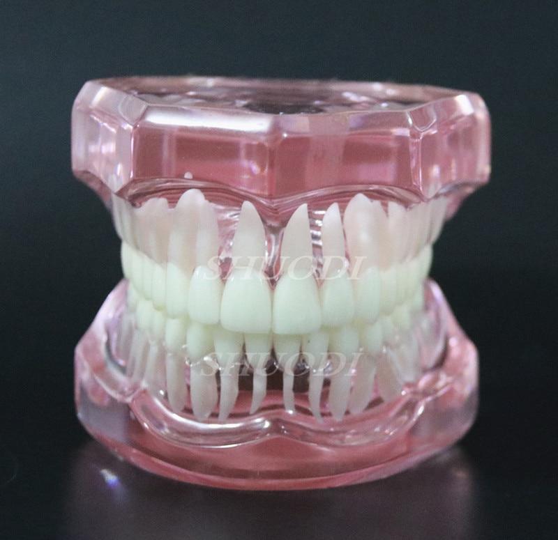1 шт. Стоматологическая стандартная модель зуба Ортодонтическая модель для связи пациента стоматологическая клиника - Цвет: Pink