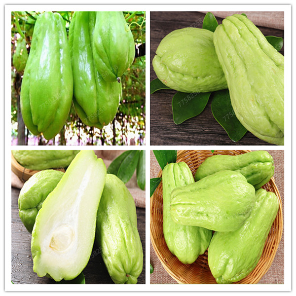 100 Pcs Delicious Chayote Vegetable Garden High-nutrition Perennial Health Vegetables