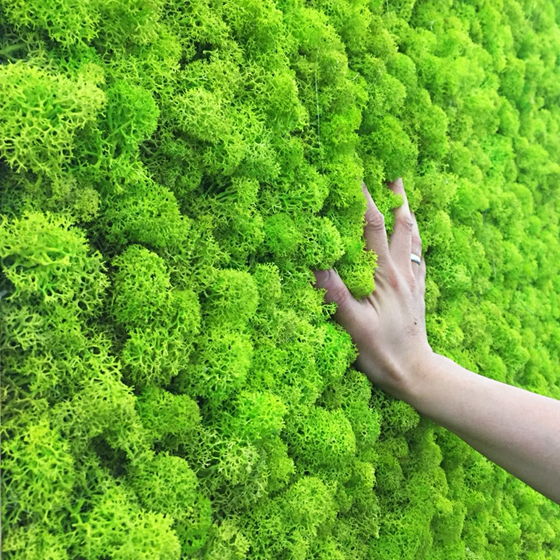 20g Artificial Plant Eternal Life Moss Garden Home Decoration Wall DIY Flower Material Mini Garden Micro Landscape Accessories
