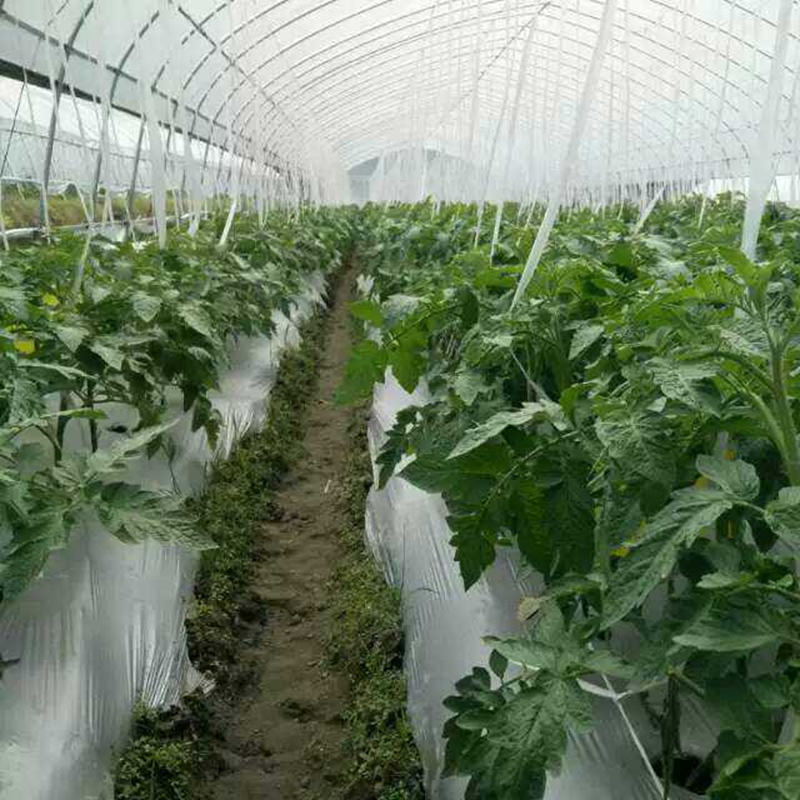 40m~5m 0.012mm Agricultral Silvery Black Reflective Film Orchard Tee Planting Plastic Mulch Film Greenhouse Vegetable Care Cover