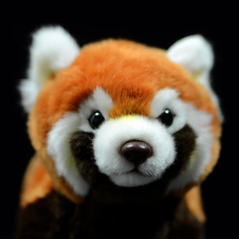 simulacao panda vermelho ailurus fulgens menor panda 04