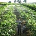 WCIC ловушка для птиц  пластиковая сеть для защиты от птиц  для пруда  фруктов  дерева  овощей  для защиты растений  садовая сетка для борьбы с в...