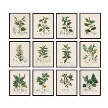 Cuadros antiguos de plantas francesas, carteles y impresiones Vintage, estudios botánicos, cuadros, pintura en lienzo, decoración de pared