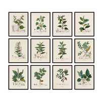 Antique French Plant Illustrations Vintage Posters and Prints Botanical Studies Wall Art Pictures Canvas Painting Wall Decor
