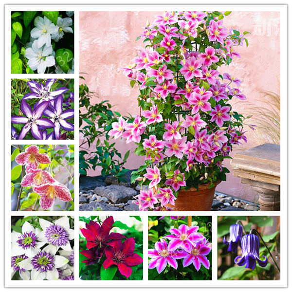 100 Pcs Hot Selling Artificial Clematis