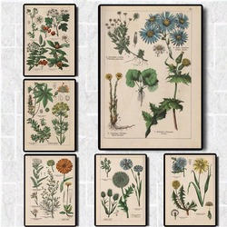 Vintage Adolphe Millot Encyclopedia Posters Prints Butterfly Flowers Insect Canvas Paintings Wall Art Picture Home Decor Cuadros