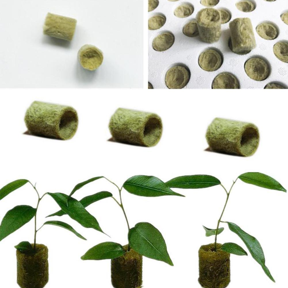 100 pcs cloning rockwool cubes with rooting hormone with tracking number