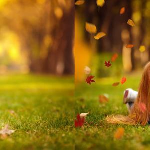 105 spadające liście nakładki fotograficzne nakładki jesienne nakładki jesienne nakładki fotograficzne nakładki PNG liście tekstury jesień tanie i dobre opinie FR (pochodzenie) Magazyn