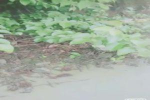 兩個村姑模樣的零零後小姐妹和個雞巴還挺大的青年到山上林中野戰