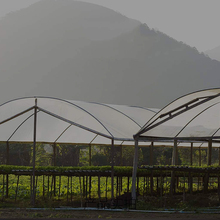 SHELTER-COVER Rainproof Patio-Plants Householdgarden Plastic Tarpaulin-Film Transparent