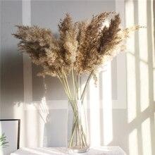 Multicolor Natural Dried Pampas Grass Phragmites Communis for Wedding Flower Bunch Modern Home Decoration DIY Craft dry flowers