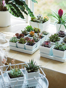 Planter-Pots Square Succulents Plastic Meshpot-2-3-4-Inches with Tray-Set
