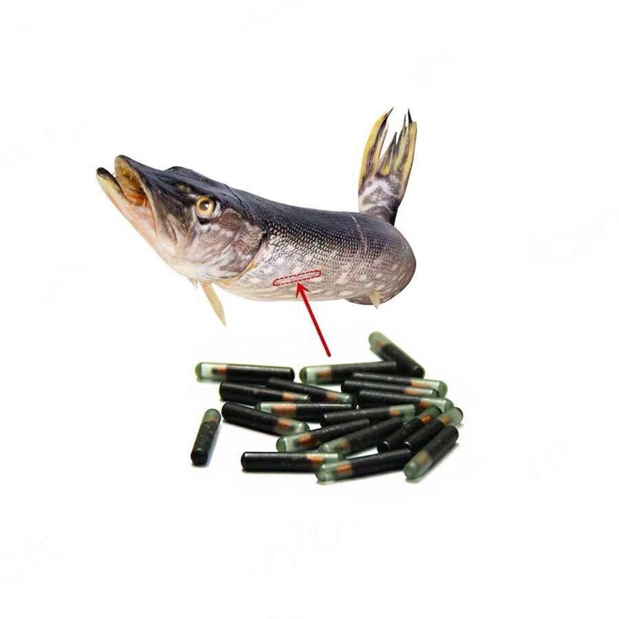 100PCS 1.4x8 Mm134.2KHz RFID Glass Tag For Pet Identification,Tag For Fish Animal Tracking/identification+5 X Syringes
