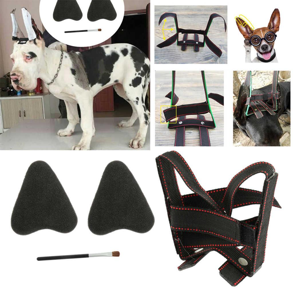 Dog Puppy pielęgnacja uszu zestaw narzędzi stojących do Samoyed, doskonałe korygowanie uszu