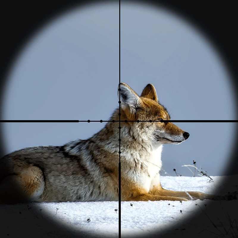 Mira de Rifle táctica DIANA 8-32X50, punto rojo, verde, mira de francotirador, mira compacta de rifle de caza, mira de Rifle cruzada, mira de francotirador