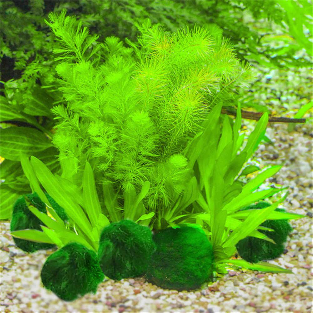 יפן אמיתי אקווריום כדור גינון 1cm כלורלה אצות Marimo שמחה סביבתי ירוק אצות כדור EZLIFE PT0305