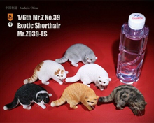 1/6 Exotic Shorthair Cat 6 Colors Mr.Z Simulation Animal 39th Bomb MRZ039 Model for 12