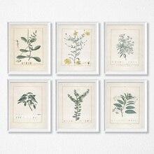 Estudios botánicos pósteres e impresiones Vintage ilustraciones de plantas francesas antiguas lienzo pintura botánica arte de la pared Fotos decoración