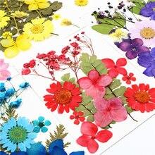 Pipifren-pequenas flores secas prensadas | scrapbooking flores, decoração floral preservada, diy, mini bloemen flores secas
