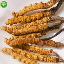 Wild Organic Cordyceps Sinensis Wild Aweto Cordyceps Cordyceps Mushroom Dong Chong Xia Cao Improve Immunity