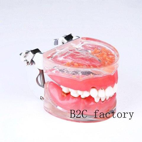 cheap modelo ensino dental
