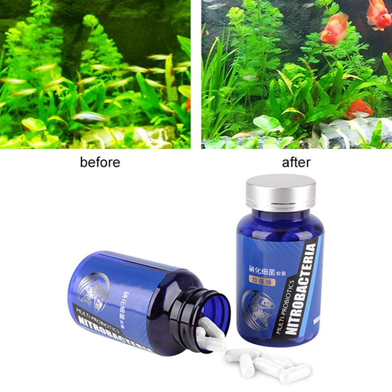 50Pcs Nitrifying Bacteria For Fresh Water And Marine Water Fish Tank Water Fish Tank Aquariums Cleaning Tool High Quality