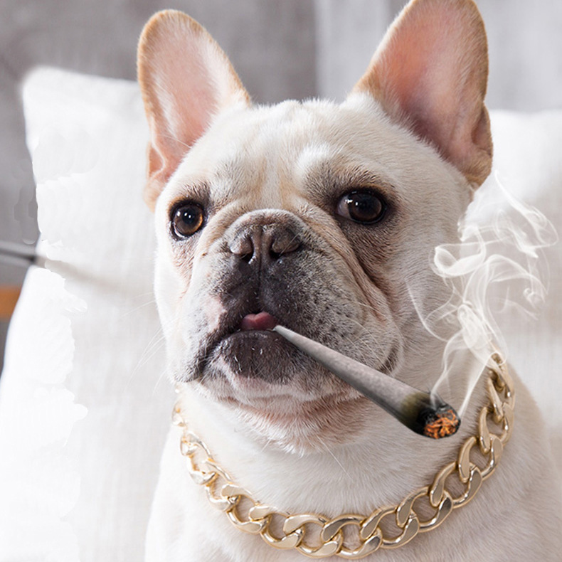 Dog Metal Daikin Chain Teddy Law Bucket Neck Ring Small And Medium-sized Dogs Pet Necklace Summer Neck Ornaments Fashion Accesso