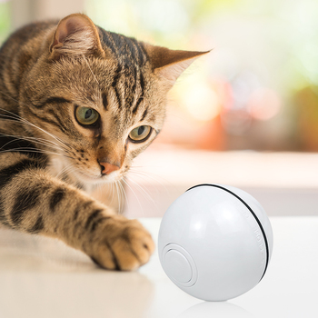 Cat Electric Rolling Ball 5