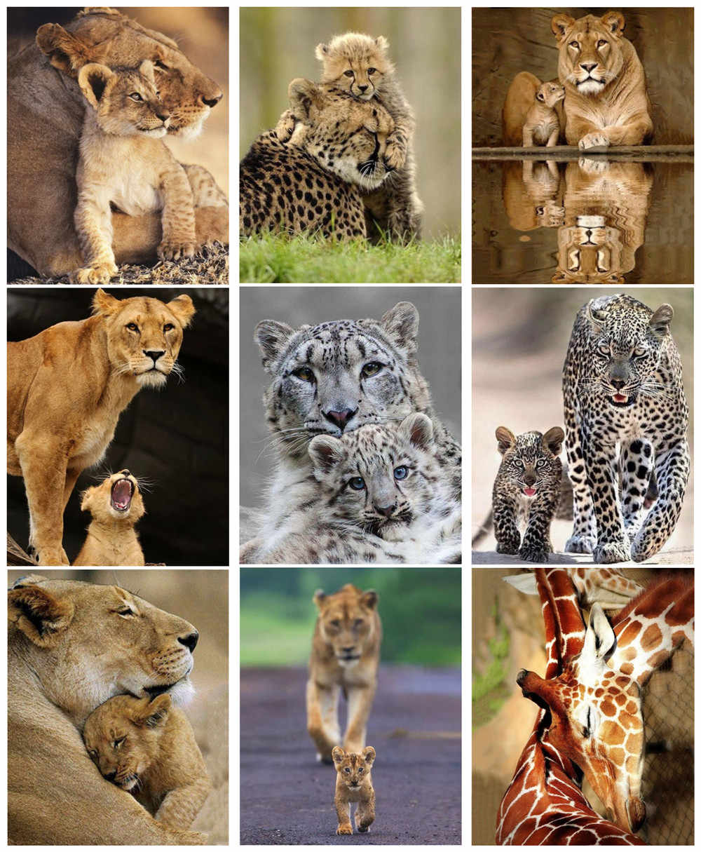 Hewan Liar 5D Lukisan Berlian Tiger Lion Cross Stitch Kit Buatan Tangan Ibu Cinta Stiker Dinding Diamond Bordir Lukisan