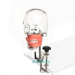 Image 4 - Dental simulator Nissin manikin phantom head Dental phantom head model with new style bench mount for dentist education