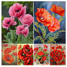 5D DIY Diamond Painting Full Square/Round Drill Poppy Flower Cross Stitch Kit Embroidery Mosaic Picture Of Rhinestones Decor