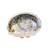 11-12cm Seashells Natural Abalone Shells Ocean Home Decor DIY Nautical Wedding Decoration Soap Holder Shells for Jewelry Making 1