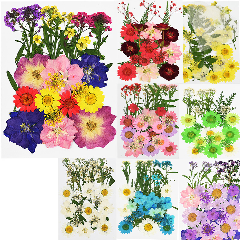 Pressed Flowers Mini Dried Flowers Diy Frame Scrapbooking Crafts Decor Preserved Flower Heads Wedding Party Home Decor Supplies Artificial Dried Flowers Aliexpress