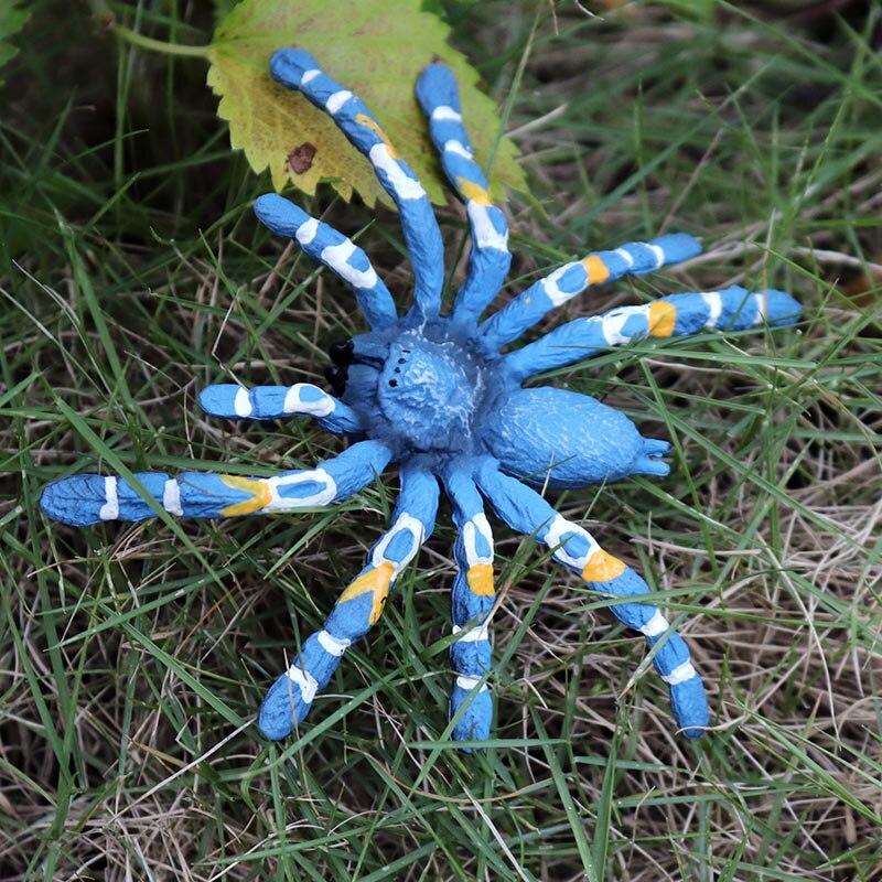 PL127-683巴西蓝色捕鸟蜘蛛 (2)
