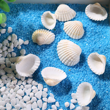raw materials natural shell Snow Shell White Crafts home decor furnishings Aquarium Fish tank wedding decoration