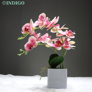 Image 5 - INDIGO  (1 zestaw) orchidea aranżacja prawdziwe z wazonem dotyk Bonsai kwiat na wesele dekoracja centralny kwiaciarnia Dropshipping